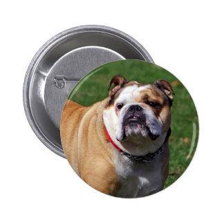 English bulldog button pin gift idea