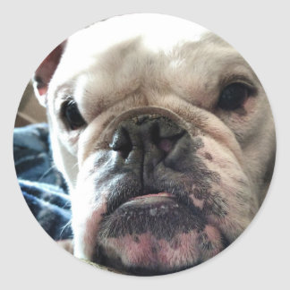 English Bulldog Classic Round Sticker