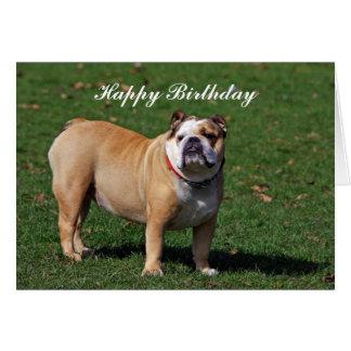 English bulldog happy birthday greeting card