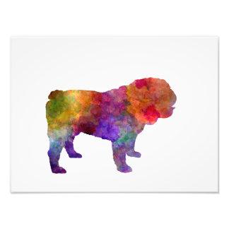 English Bulldog in watercolor Photo Print