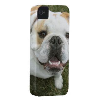 English bulldog Iphone 4 case