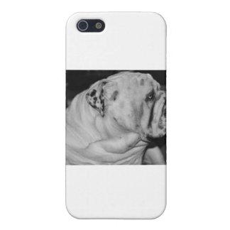 English Bulldog iPhone 5/5S Cover