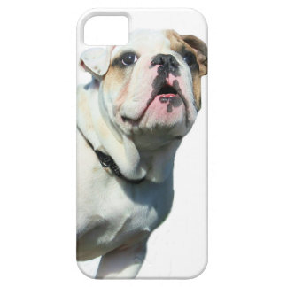 English bulldog iPhone 5 case