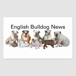 English Bulldog News Rectangular Sticker