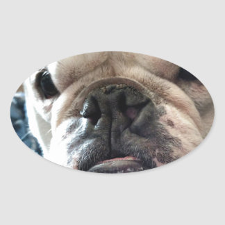 English Bulldog Oval Sticker