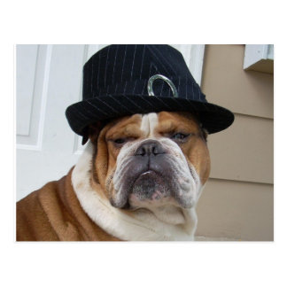 English Bulldog Postcard Post Card
