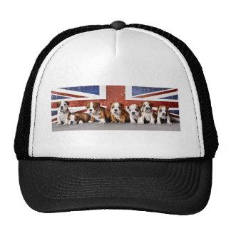 English bulldog puppies cap