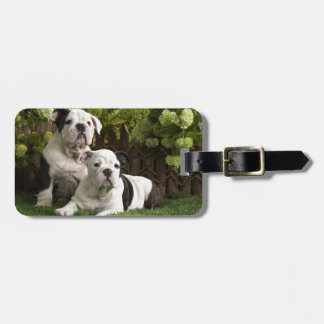 English Bulldog Puppies Luggage Tag