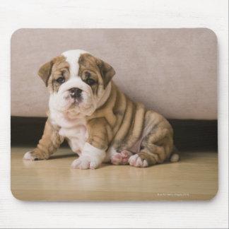 English bulldog puppies mousepads
