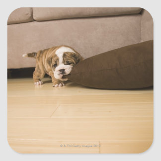English Bulldog puppy biting pillow Square Sticker