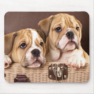 English Bulldog Puppy Dog  - Canine Mouse Pad