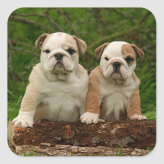 English Bulldog Puppy Dog Love Sticker / Seal