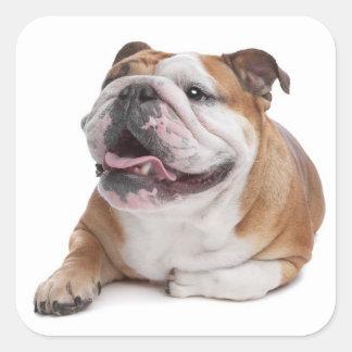 English Bulldog Puppy Dog Sticker