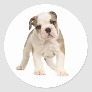 English Bulldog Puppy Dog Sticker / Seal Round Sticker