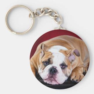 English bulldog puppy key ring