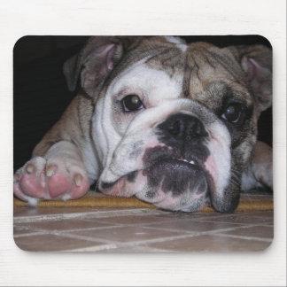 English Bulldog Puppy Mousepads
