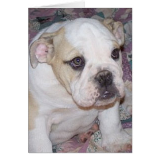 English Bulldog Puppy Notecard