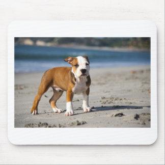 english bulldog puppy on the beach mouse mats