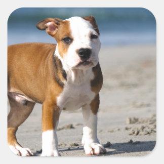 english bulldog puppy on the beach stickers