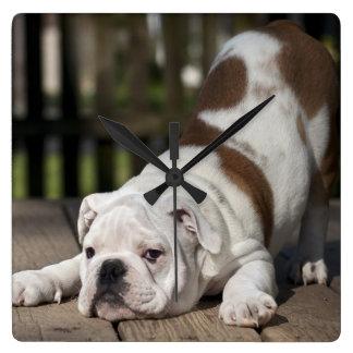English Bulldog Puppy Square Wall Clock
