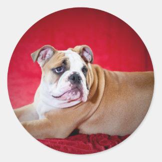 English bulldog puppy round stickers