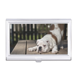 English bulldog puppy stretching down. business card holder