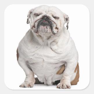 English Bulldog, sitting Square Sticker