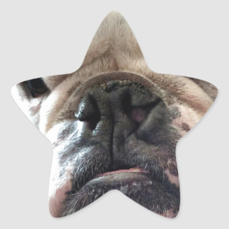 English Bulldog Star Sticker