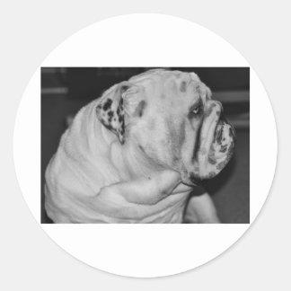 English Bulldog Round Stickers