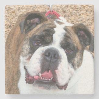 English Bulldog Stone Beverage Coaster