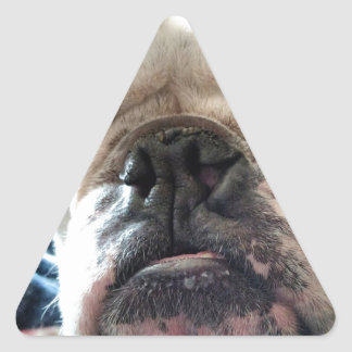English Bulldog Triangle Sticker