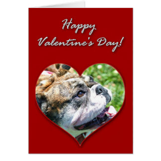 English bulldog Valentines Day Card