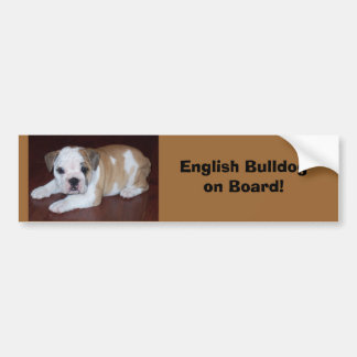 English Bulldogon Board! Bumper Sticker