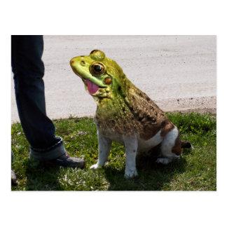 English bullfrog postcard
