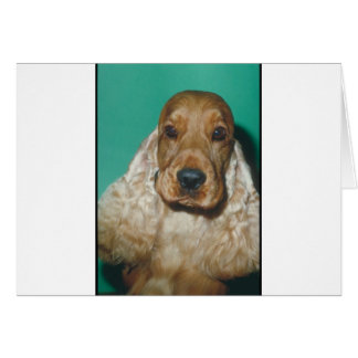 English Cocker Spaniel Card