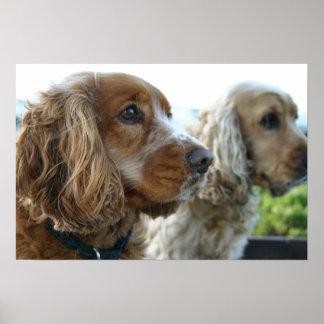 English Cocker Spaniel Dog Poster