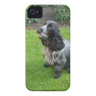 English Cocker Spaniel iPhone 4 Case-Mate Cases