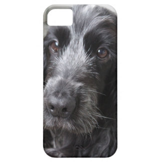 English Cocker Spaniel iPhone 5 Cases