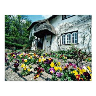 English cottage, pansies  flowers postcard