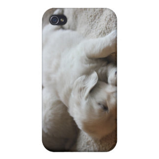 English Cream Goldens Cases For iPhone 4