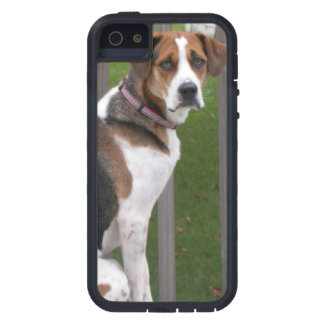 English Foxhound Cover For iPhone 5