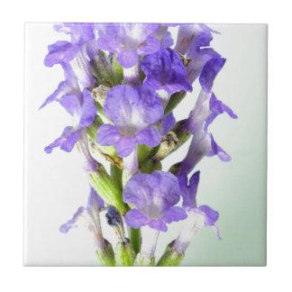 English Lavender Flower Photo Ceramic Tiles