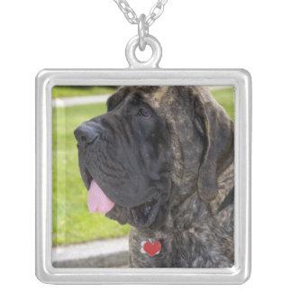 English Mastif dog in Bryon, Ohio. Square Pendant Necklace