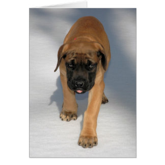 English Mastiff Puppy notecard