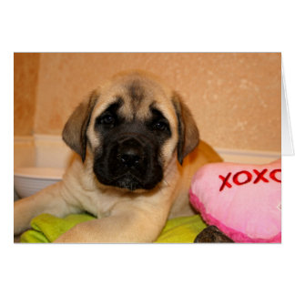 English Mastiff Puppy Valentine Card