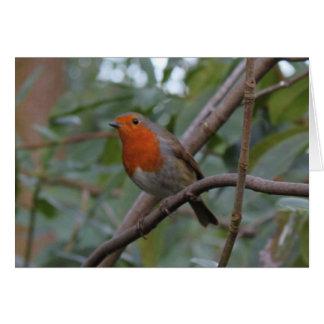 English Robin Greeting Card