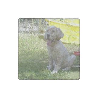 english setter orange_belton_puppy stone magnet