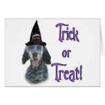English Setter Trick Greeting Cards