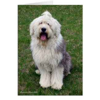 English Sheep Dog Card