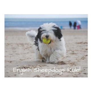 English Sheepdogs RULE Postcard! Postcard